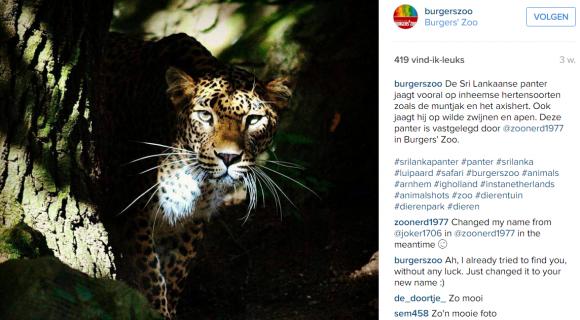 sri lankaanse panter - instagram strategie burgers zoo