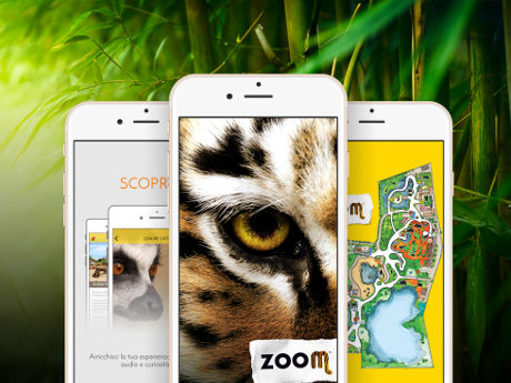 zoo zoom beacon