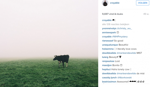 cow croyable