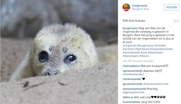 geboorte ringelrob - instagram strategie burgers zoo