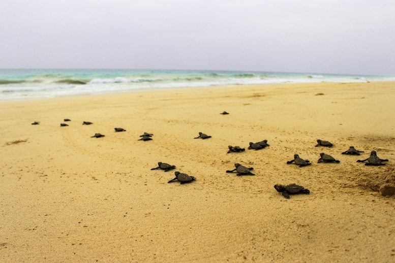 TUI Care Foundation lanceert wereldwijd turtle aid programma